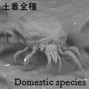 domestic species